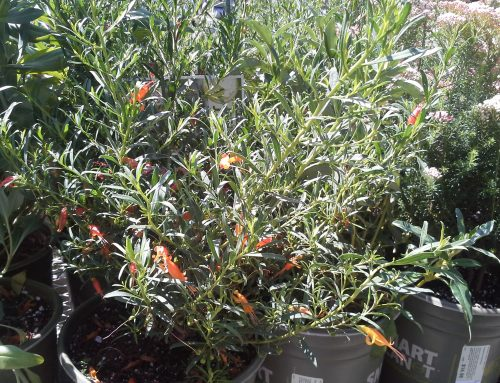 Water-Wise Plant Solutions