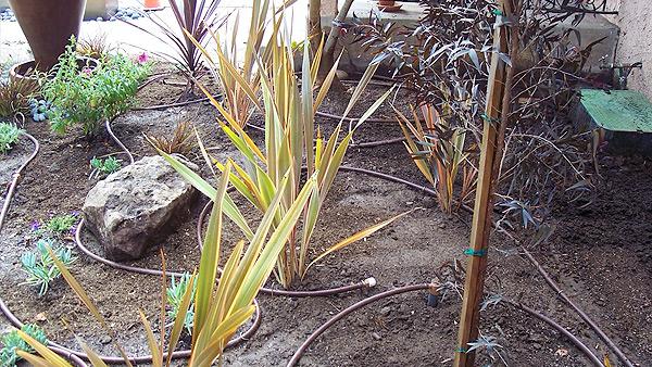 services-drip-irrigation